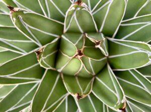 Die vieleinsetzbare Heilpflanze